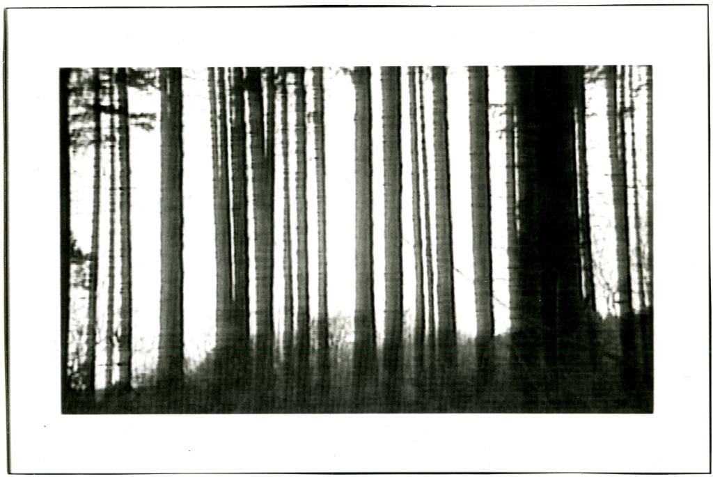 woud 0