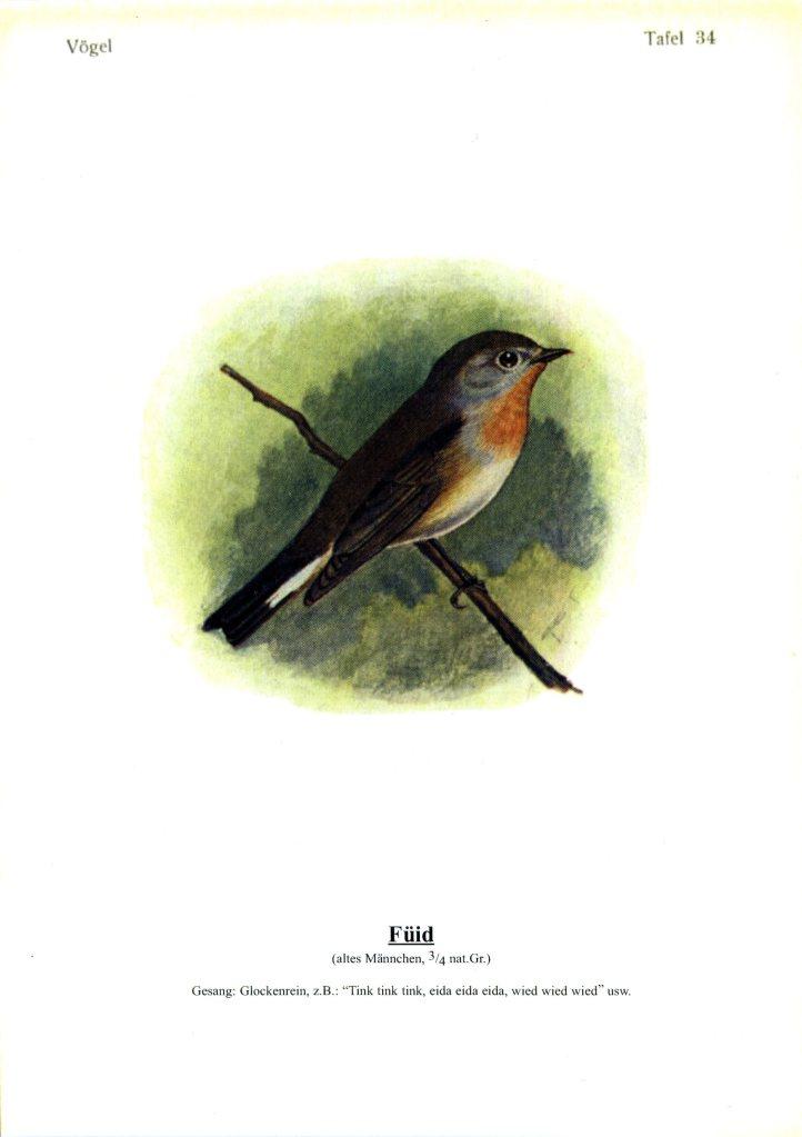 singvögel 34