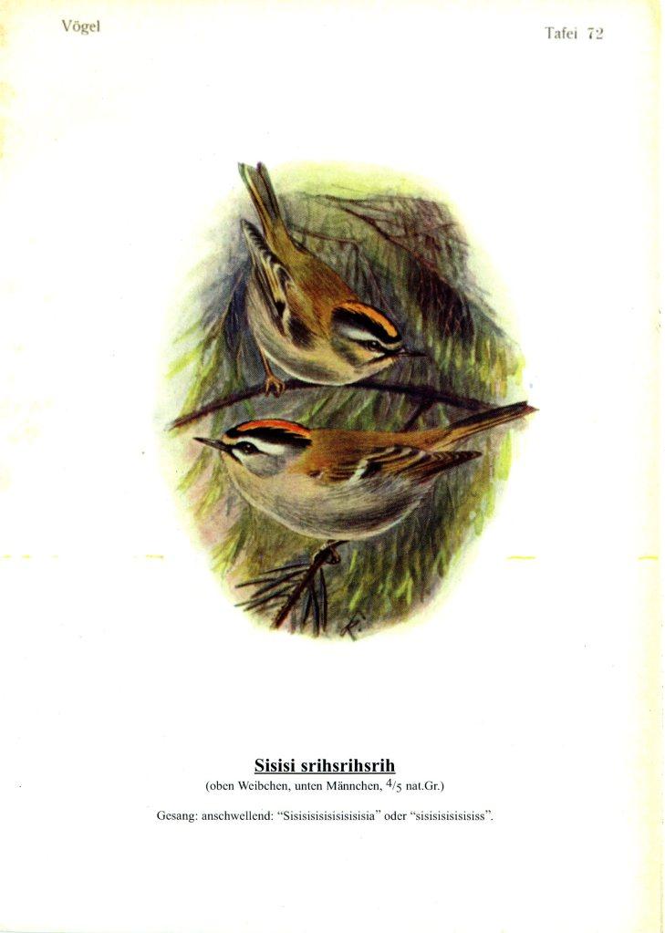 singvögel 72